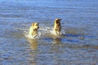 Hoseasons Dog Friendly Holiday Parks Dorset
